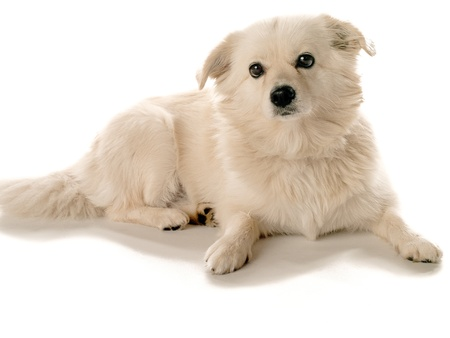 Dog laying on ground looking forward Stock Photo - 17101011