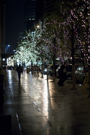 Image of electric lights on trees at night.
