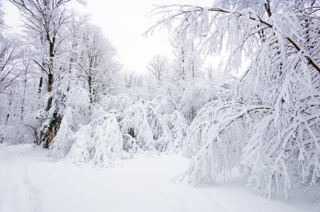 Neige reprend les arbres hors de la piste à Haliburton, Ontario Banque d'images - 17119923
