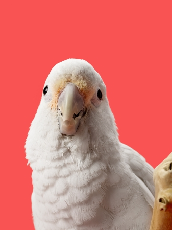 frontal view: A frontal view of bird showing its beak straight looking at the camera