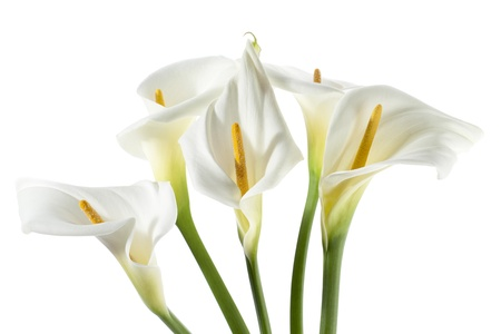 Horizontal image of a cropped bouquet of white calla lilies