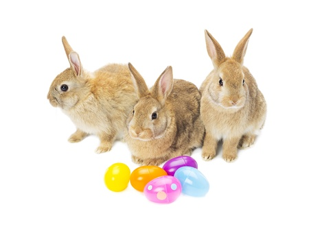 Easter bunnies with colorful easter eggs isolated over white background Stock Photo - 17134693