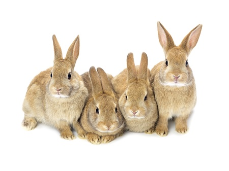 A picture of four lovely baby bunnies Stock Photo - 17134756