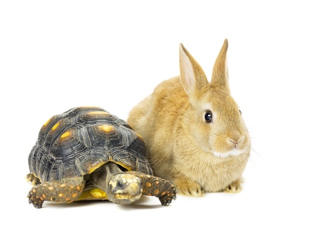 Rabbit and turtle in a close-up image photo
