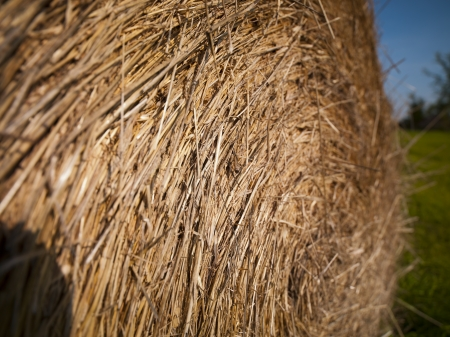 Detailed view of of hay bale.