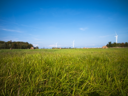 View of grass field with Blue sky in the background. Stok Fotoğraf