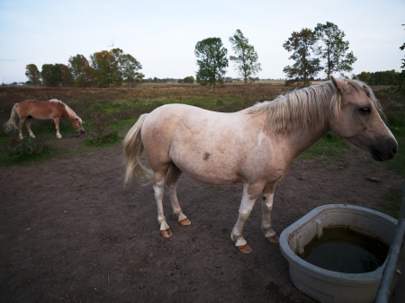 domestic: View of domestic horses at field. Stock Photo