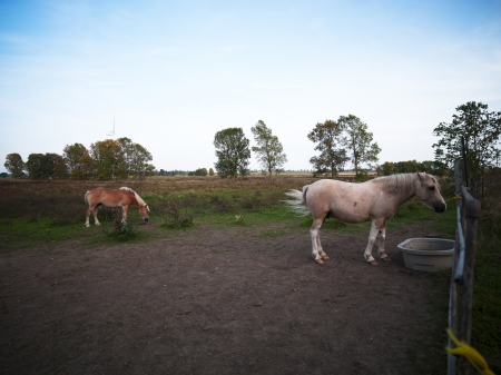 domestic: View of domestic horses at farm.