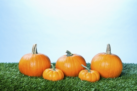 View of halloween pumpkins arranged in a row against  blue background. photo