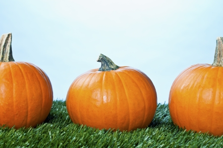 Cropped view of halloween pumpkins arranged over grass. photo