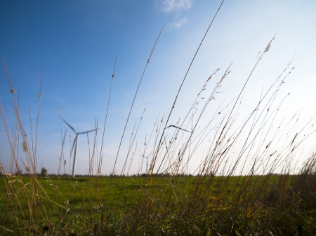 Image with reeds with field in the background.