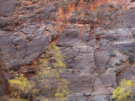A tree losing its leaves in front of a tall rock face in Zion, USA. Stock Photo