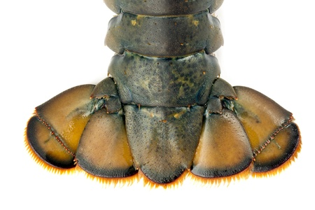 Close up image of lobster tail against white background