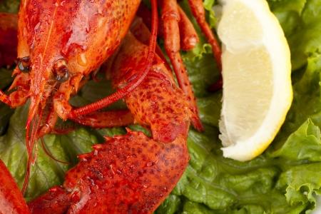 lobster dinner: Macro image of a lobster dinner with slice lemon on the top of green lettuce Stock Photo