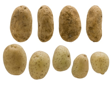 varying: Various potatoes of varying shape and size are arranged into rows.