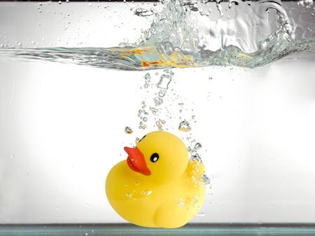 pato de hule: Imagen de primer plano de un pato de goma amarillo en el agua