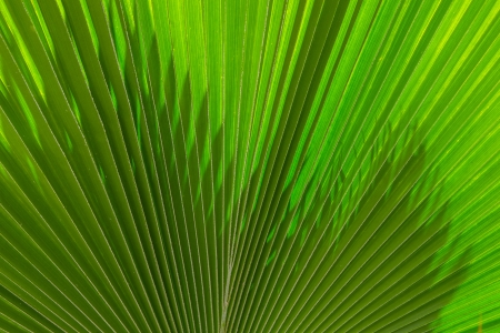 Palm leaf in a background image