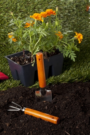 Rake and hoe beside two flower box in the backyard Stock Photo - 17168974