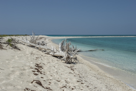 Image of dead trees at dry tortugas beach photo