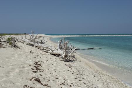 arboles secos: Imagen de los �rboles muertos en seco playa tortugas