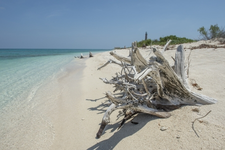 dry tortugas: Image of dead trees at seashore of dry tortugas beach