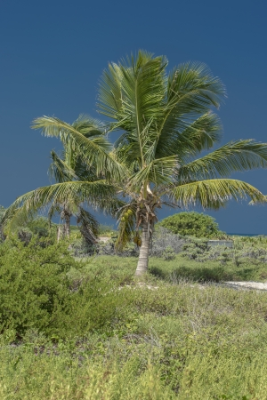 Image of palm tree with clear blue sky photo