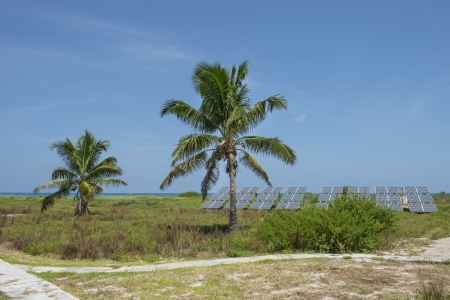 dry tortugas: Distance view of palm trees at Dry Tortugas island Stock Photo