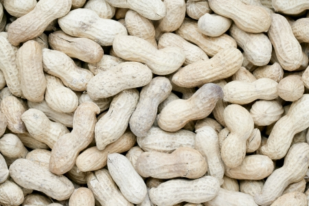 pygmy nuts: A group of groundnuts with shell as background