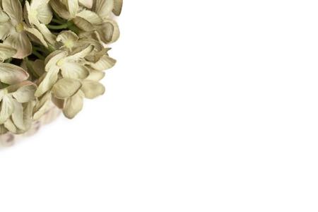 新鮮な白い花の花束の画像をトリミング