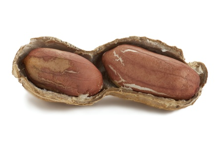 Close-up image of an earthnut on shell lying on a white background Stock Photo - 17151612