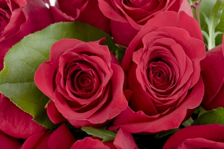 Bouquet of beautiful red roses in a macro image photo
