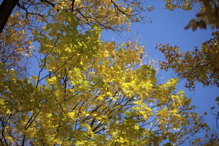Close-up image of autumn leaves against clear sky. Stok Fotoğraf