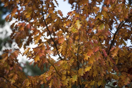 Close-up of autumn leaves. Stock Photo - 17207417