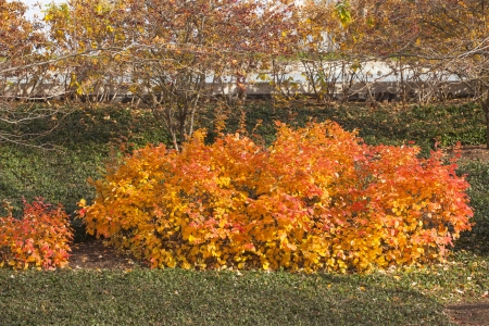 Autumn trees in a landscape image Stock Photo - 17210536