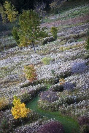 Tilt image of autumn trees.