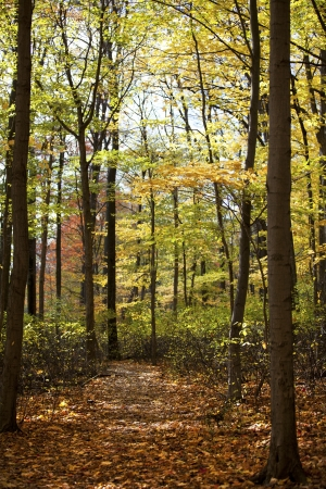 View of forest with autumn trees. Stock Photo - 17210524