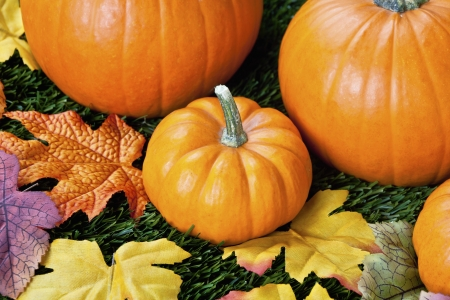 Close-up view of halloween pumpkins with autumn leaves. Stock Photo - 17208328