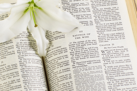 A white flower in a holy bible photo