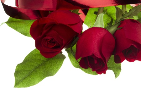 Beautiful red roses and ribbon in a close-up image Фото со стока