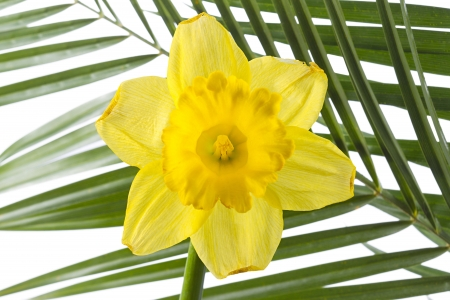 Image of yellow flower and palm leaf photo
