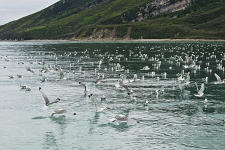 as far as the eye can see: Seagulls sitting on the water as far as the eye can see Stock Photo