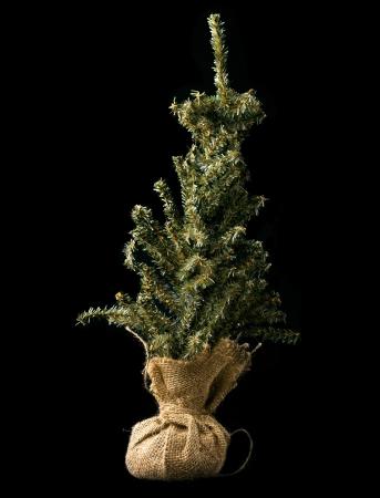 블랙에 고립 된 replanted 될 아직 작은 나무의 쐈 어.
