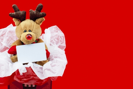 Close-up image of a soft teddy bear with thorns inside a Christmas present with a empty placard over plain red background. photo