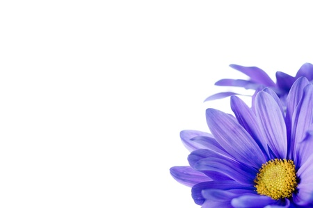 Cropped image of purple daisy flower Imagens