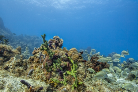 Image of coral reefs and group of fish photo
