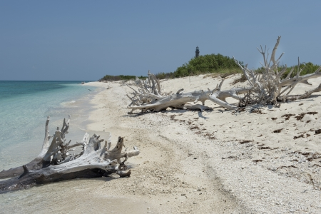 fort jefferson: Dead tress at the shore of Dry Tortugas beach Stock Photo