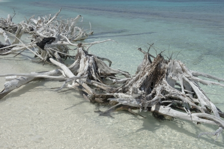 fort jefferson: Image of driftwoods at seashore of dry tortugas beach