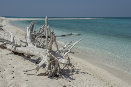 dry tortugas: Close-up image of a driftwood at the white sand beach Stock Photo