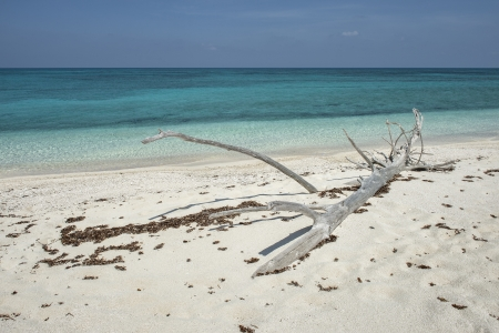 fort jefferson: Close-up image of a driftwood at the sea side, Florida Stock Photo