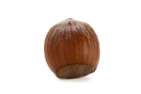 hazel nut: Hazel nut isolated in a white background